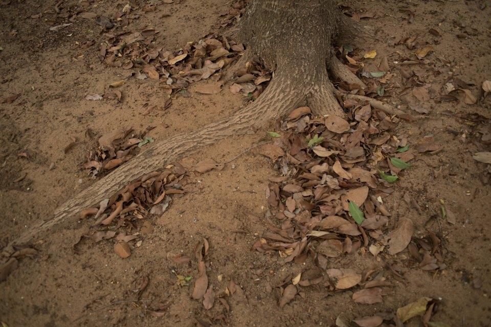 photo kyobi.blog elementary when understood